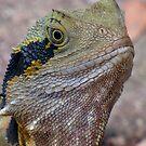 Portrait Image - Male Water Dragon Lizard by stevealder