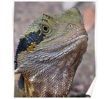Portrait Image - Male Water Dragon Lizard Poster