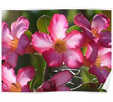 spring - primavera Poster