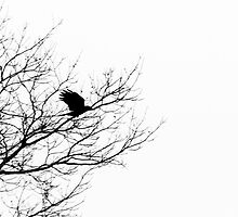 A Crow Flies Past a Lifeless Tree by JohnMagana