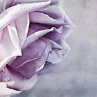purple rose by lucyliu