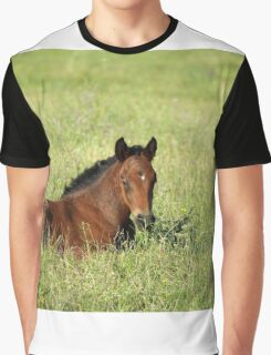horse foal in summer pasture Graphic T-Shirt