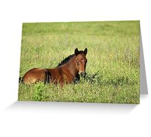 horse foal in summer pasture Greeting Card