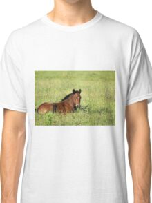 horse foal in summer pasture Classic T-Shirt