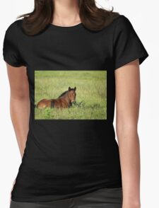 horse foal in summer pasture Womens Fitted T-Shirt