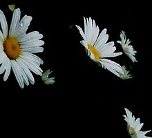 Falling Daisies by ElizC