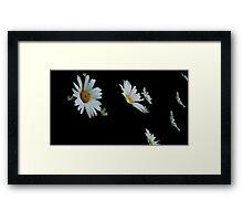 Falling Daisies Framed Print