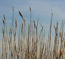 Beach Grass by AnneDB