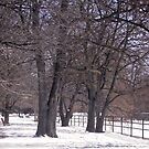 More Winter Trees by Shulie1