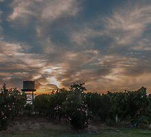 swan valley sunset  by warren dacey