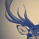 Head on L by Landon Wierenga