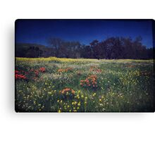 Through the Blooming Fields Canvas Print