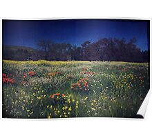 Through the Blooming Fields Poster
