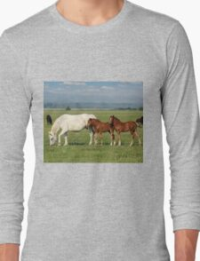 white horse and brown foals in pasture Long Sleeve T-Shirt