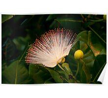 Wild Beach Flower Poster