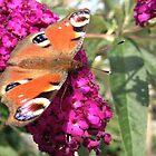 butterfly in the sun by Janneke Broeksteeg