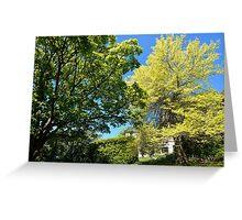 Spring Trees Greeting Card