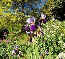 Spring Iris by Guyzimijz