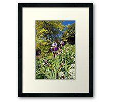 Spring Iris Framed Print