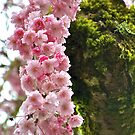 Weeping Cherry Tree by Cee Neuner