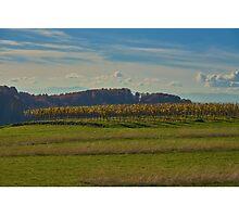 Kaiserstuhl - vines Photographic Print