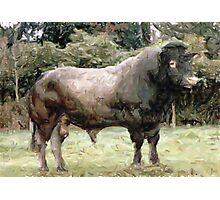 Bazadaise Bull Cattle Portrait Photographic Print