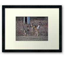 We must leave now Framed Print