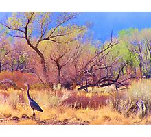 Crane Territory Photographic Print