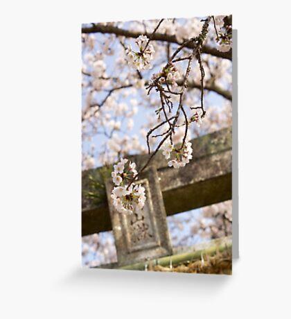 torii spring sakura Greeting Card