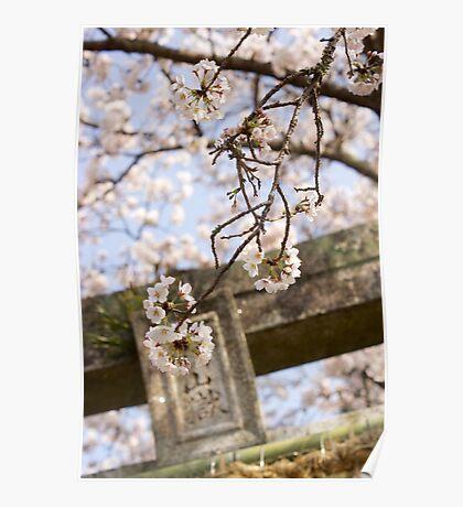 torii spring sakura Poster