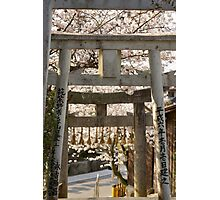 cherry blossom and torii (another view) Photographic Print
