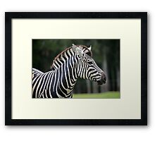 African Plains Zebra Framed Print