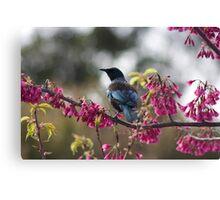 Tui in Blossoms Canvas Print