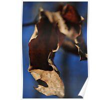 Curled Leaf Poster