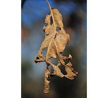 Leaf Holes Photographic Print