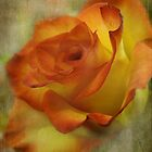 The orange rose by vigor