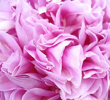 Pink Papery Peony by sarahleone