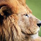 Pensive Lion Profile by Kenneth Keifer