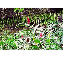Ginger and the Fern Grotto Photographic Print