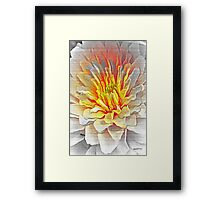 Dahlia Flower from Dark to Bright Framed Print