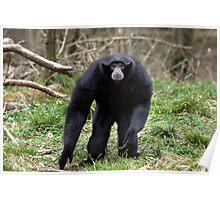 The Gibbon Poster