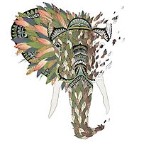 Asian Elephant by Haley Luden