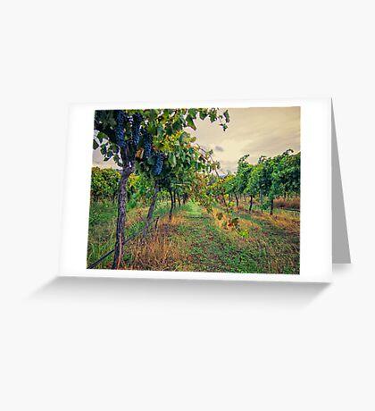 Vineyard Colours Greeting Card