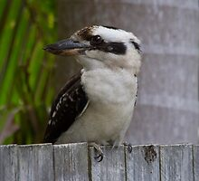Fence Sitting by byronbackyard