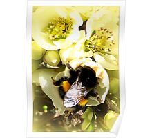 Hungry Bumble Bee Poster