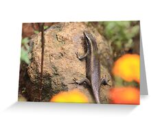 African Striped Skink on a rock Greeting Card