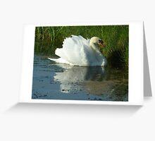 Mute Swan Busking Greeting Card