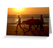 Cow at Sunset Greeting Card