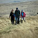 Sunday Stroll by Paul Barnett