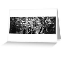 Muir Woods - San Francisco Greeting Card